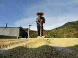 Guatemala - drogen van koffiebonen